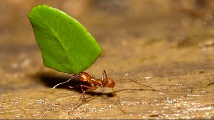 Quiero ser hormiga!
